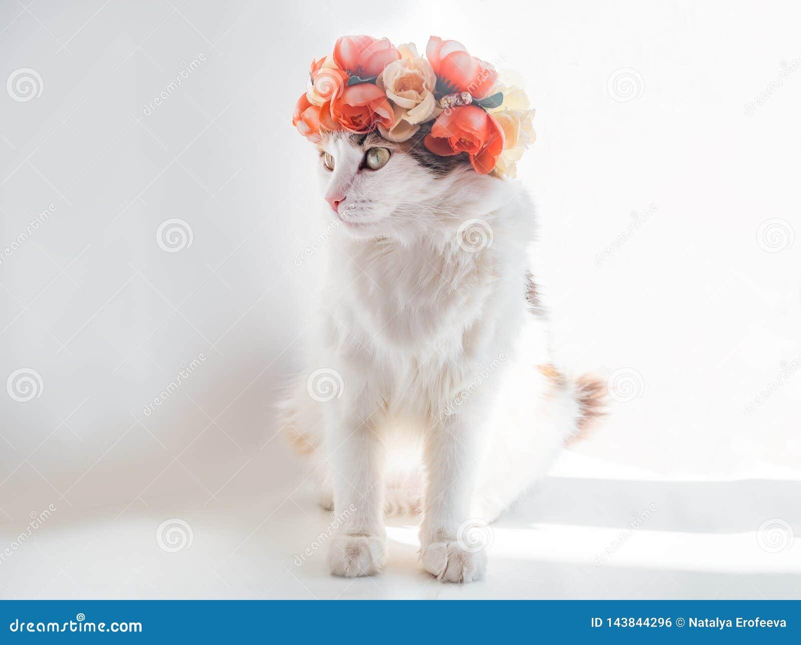 Красивый кот ситца с венком на его голове Милая киска в diadem цветков на ее голове сидит в солнце и взглядах
