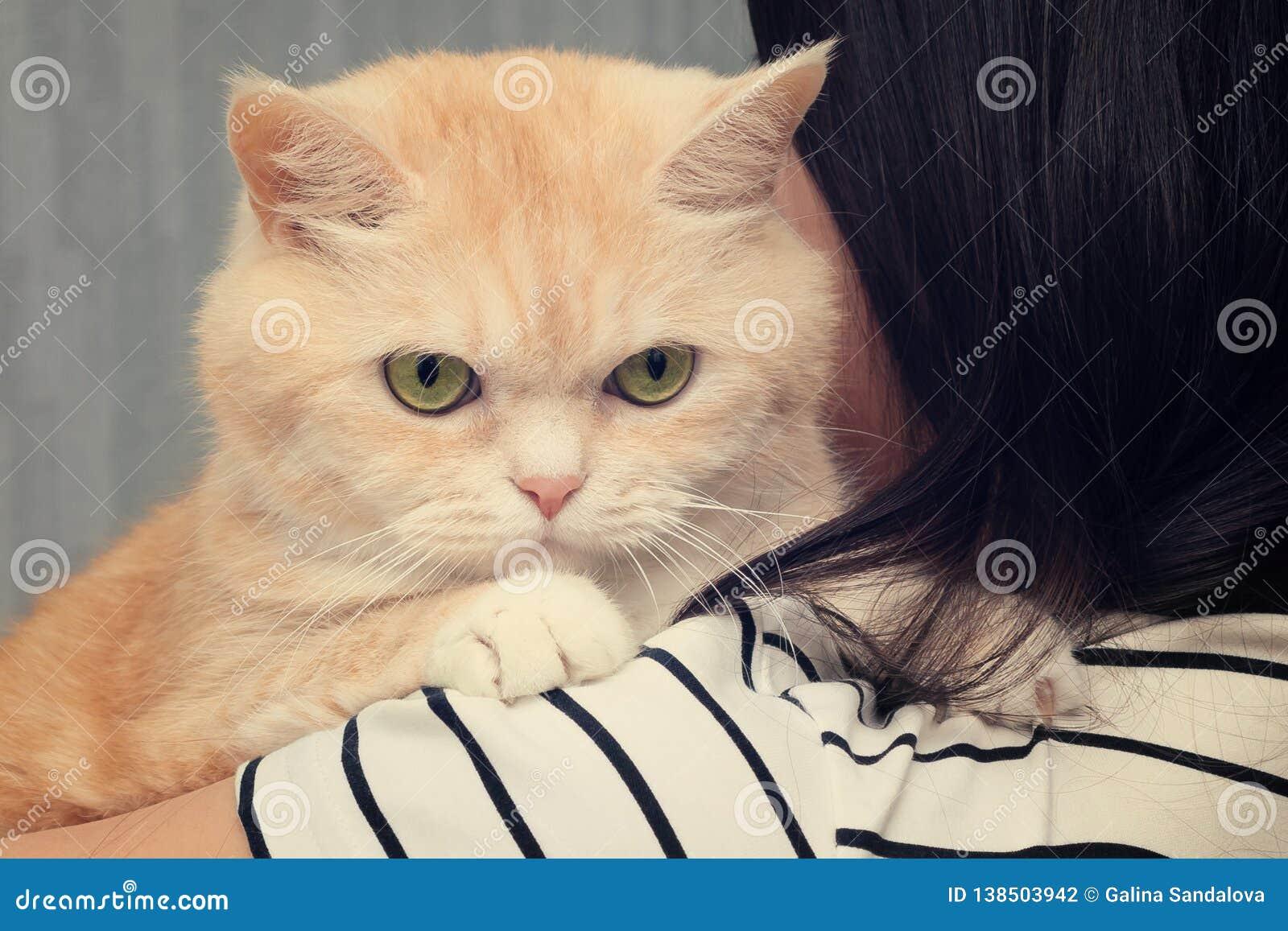 Красивый кот сливк сидит на плече темн-с волосами девушки