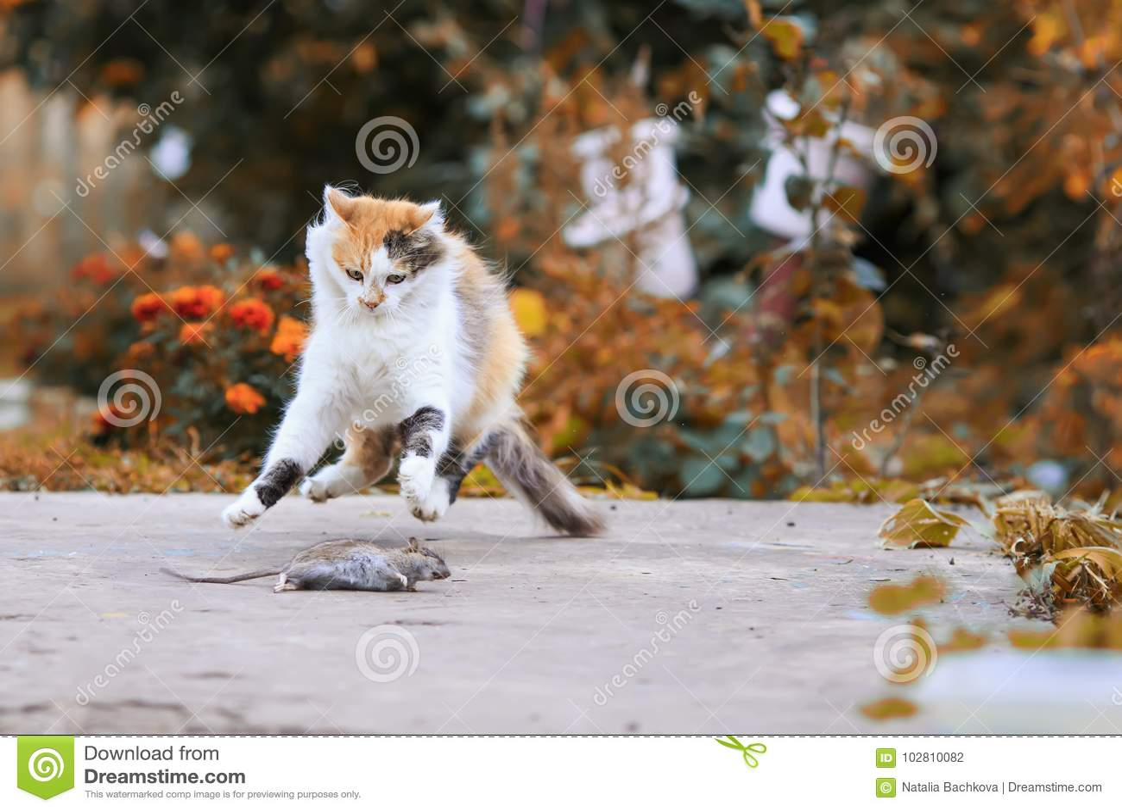 Красивый кот уловил мышь в саде лета и потехе и j