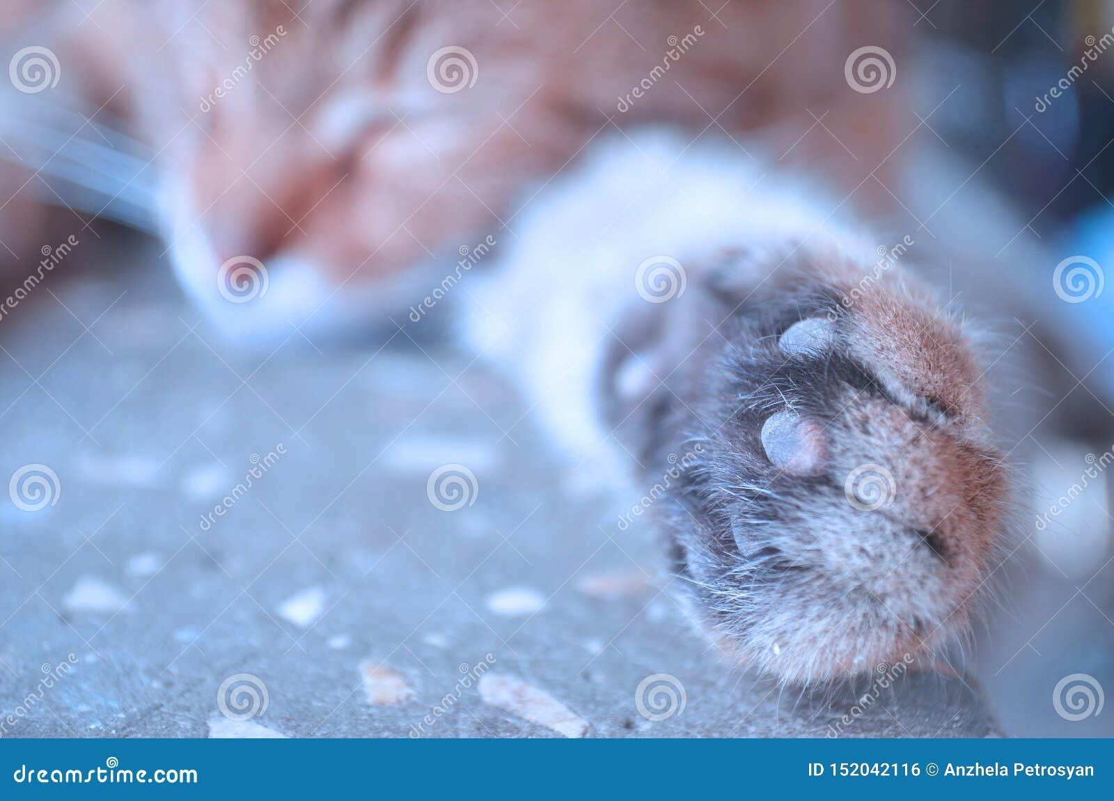 Красивый кошачий кот дома