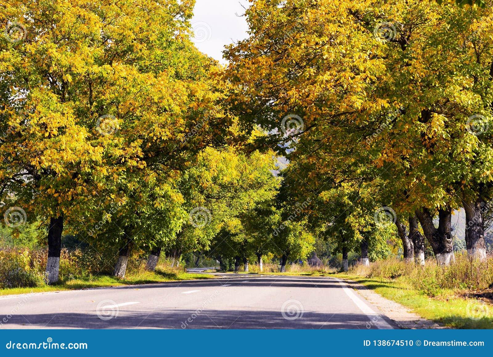 Красивый ландшафт осени с желтыми и коричневыми листьями