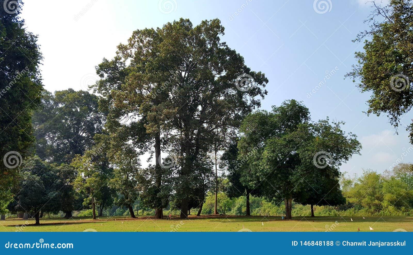 Красивый ландшафт с большими деревьями на лужайке