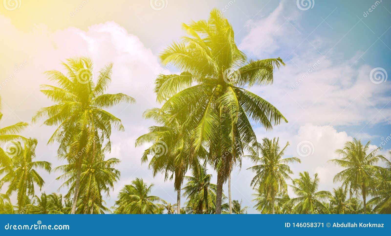 Красивый ландшафт с пальмами кокоса