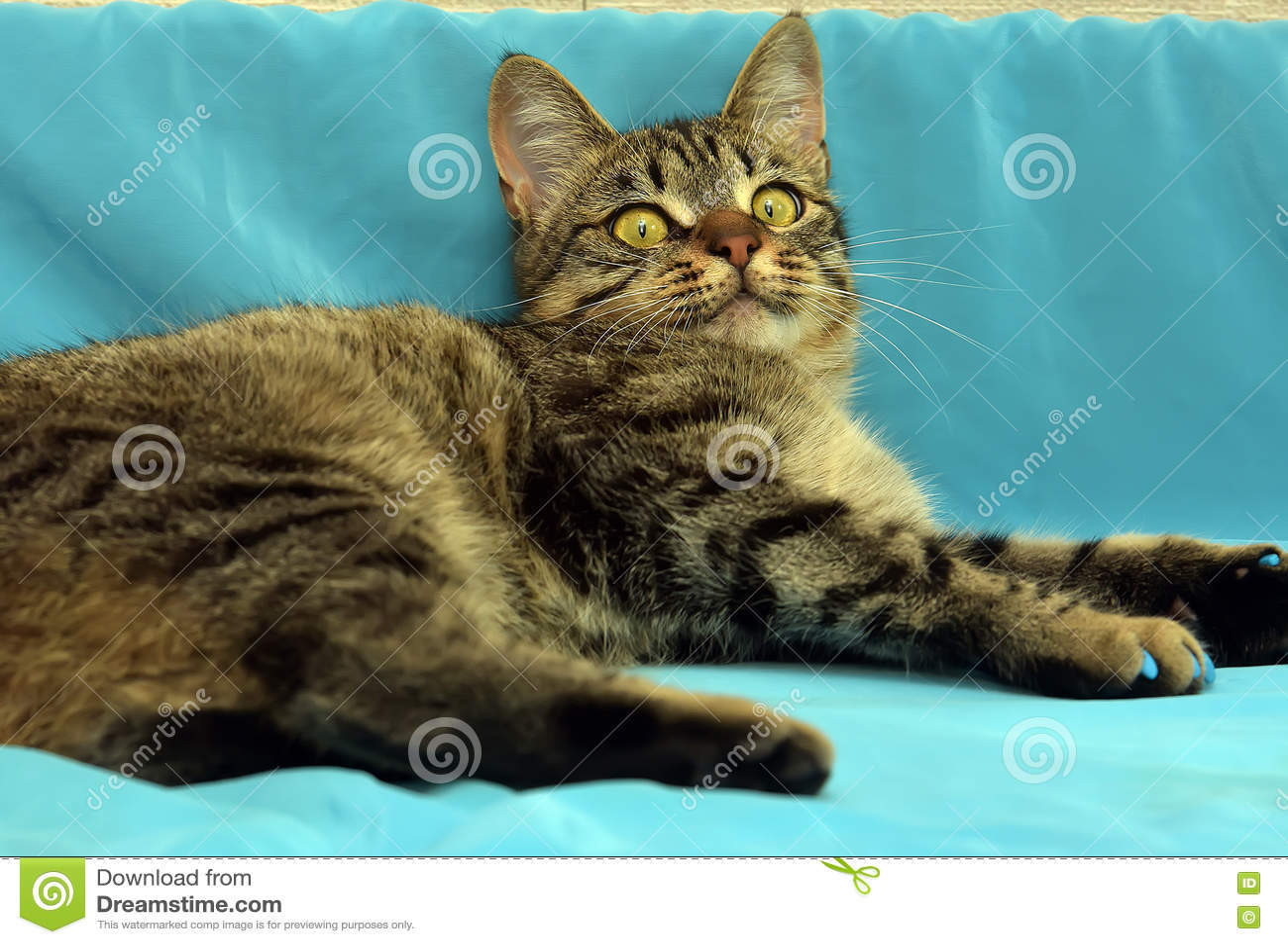 Красивый молодой кот tabby