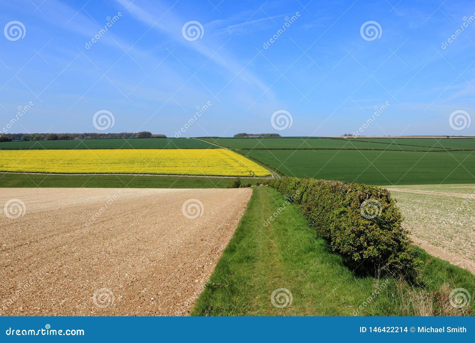 Красивый обрабатывая землю ландшафт с красочными полями заплатки в весеннем времени