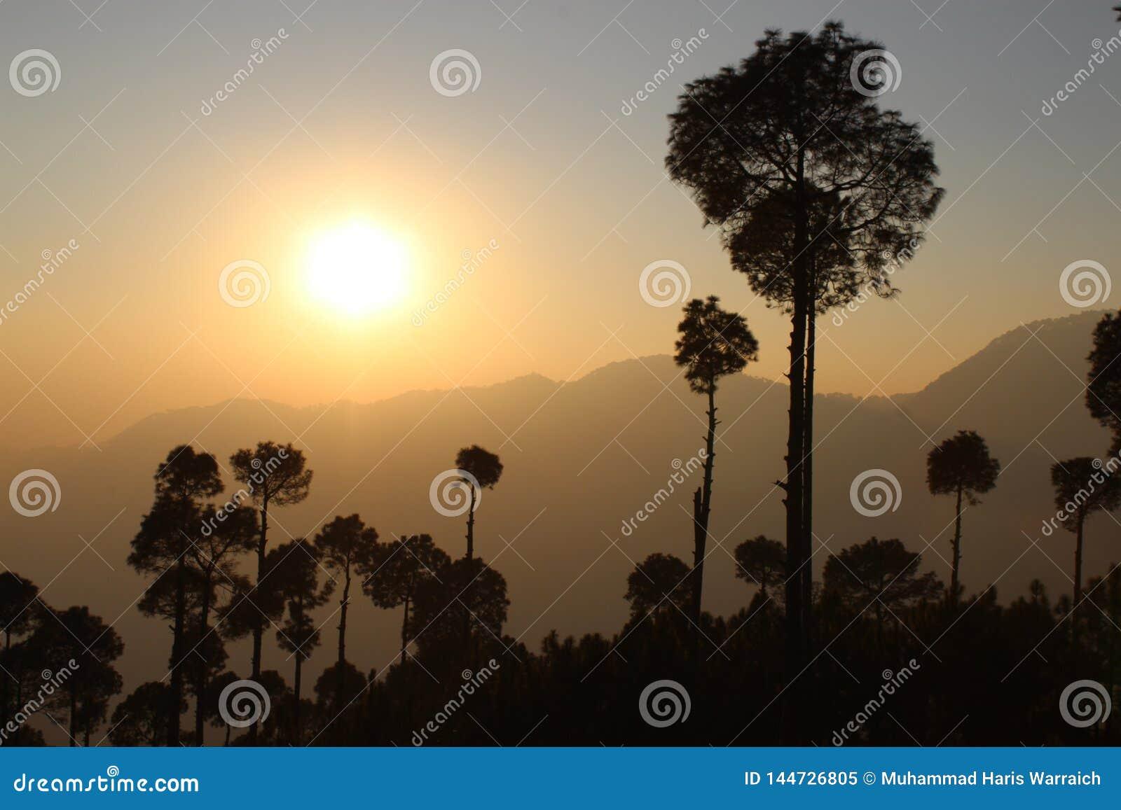 Силуэт дерева на заходе солнца