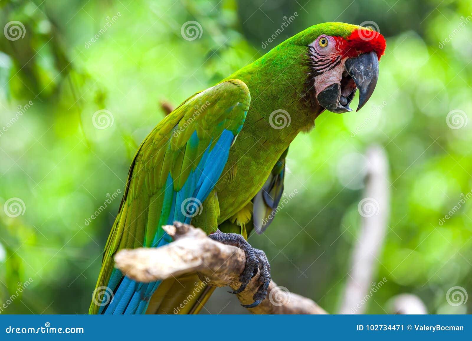 Красивый попугай в тропическом зоопарке Ubud, Бали, Индонезии