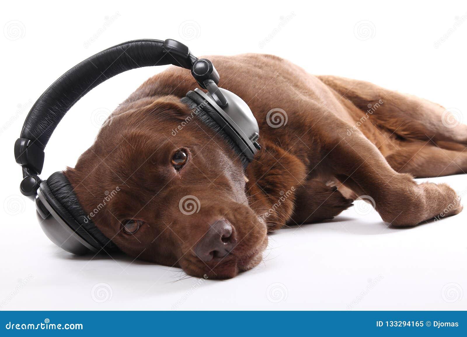 Красивый портрет счастливой собаки
