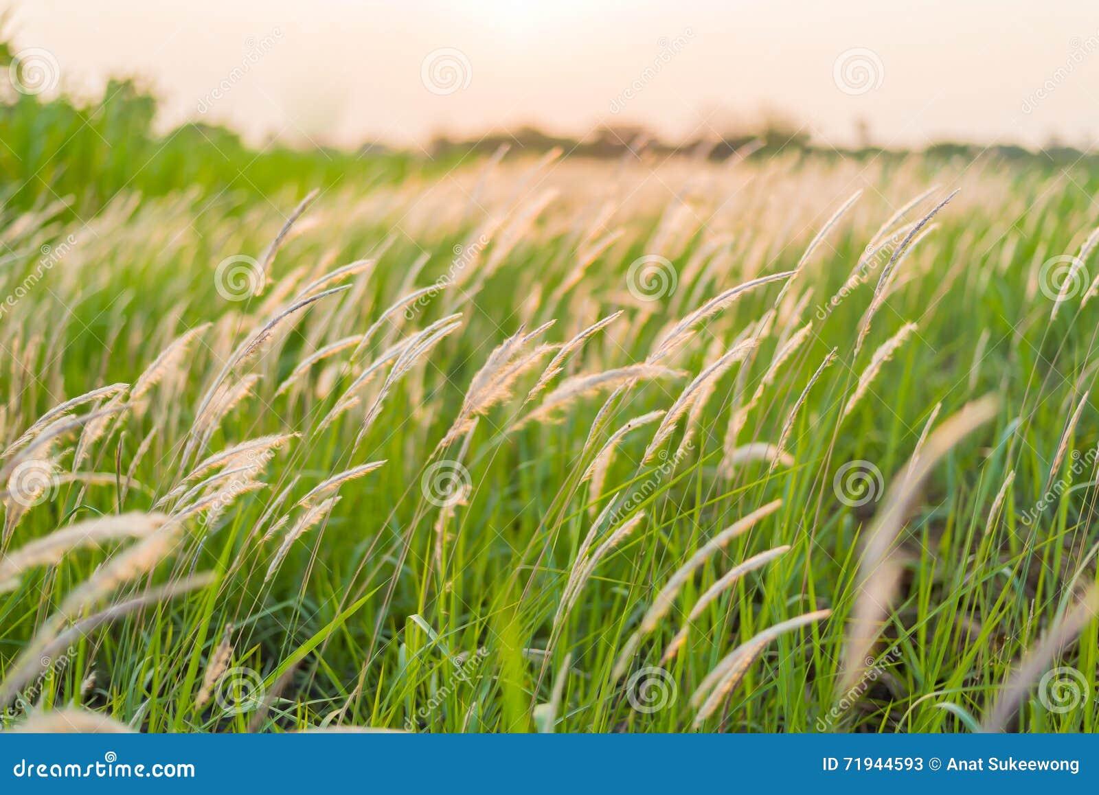Красивый полевой цветок на заходе солнца