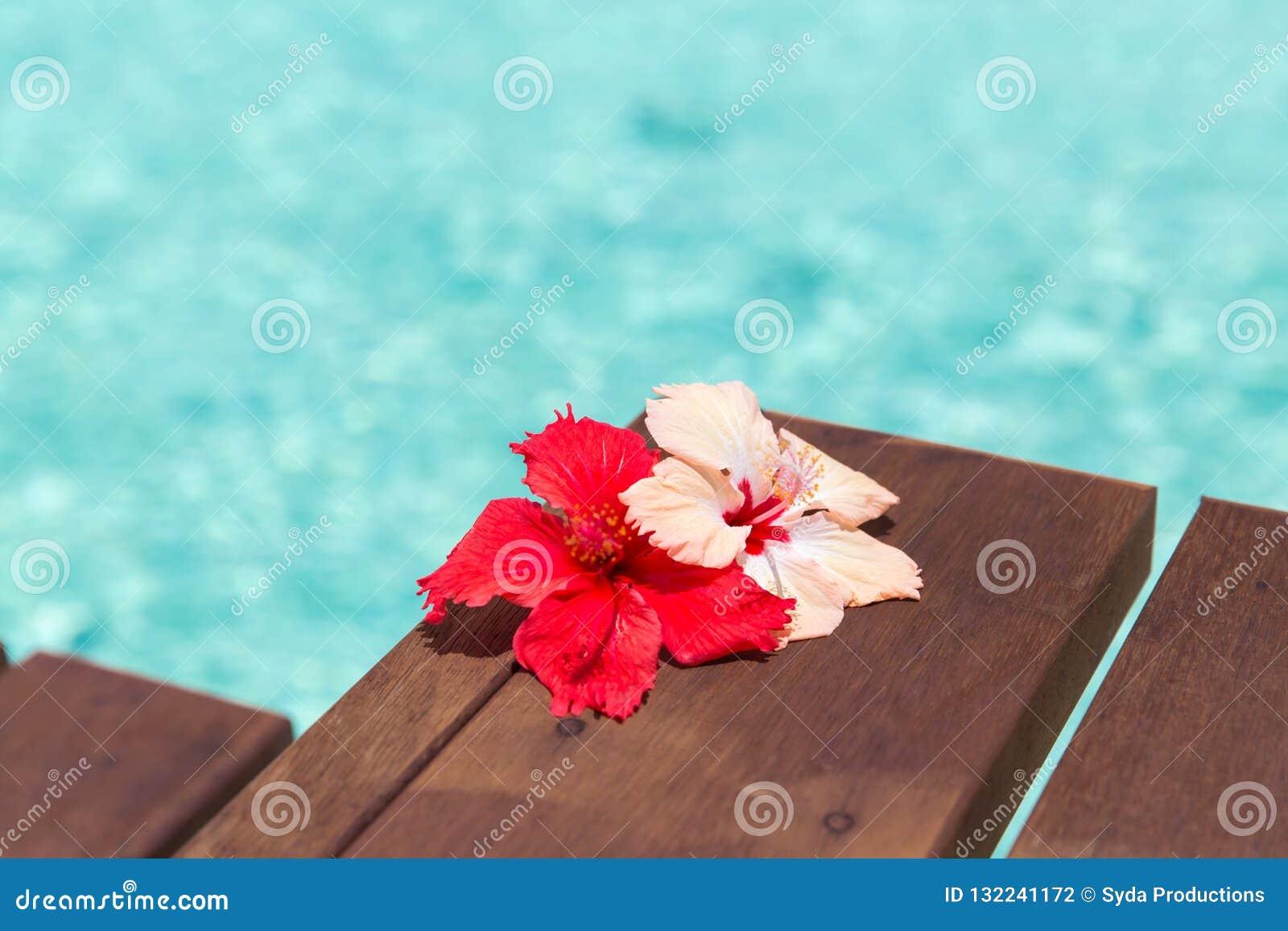 Красивый пурпурный цветок гибискуса на деревянной пристани