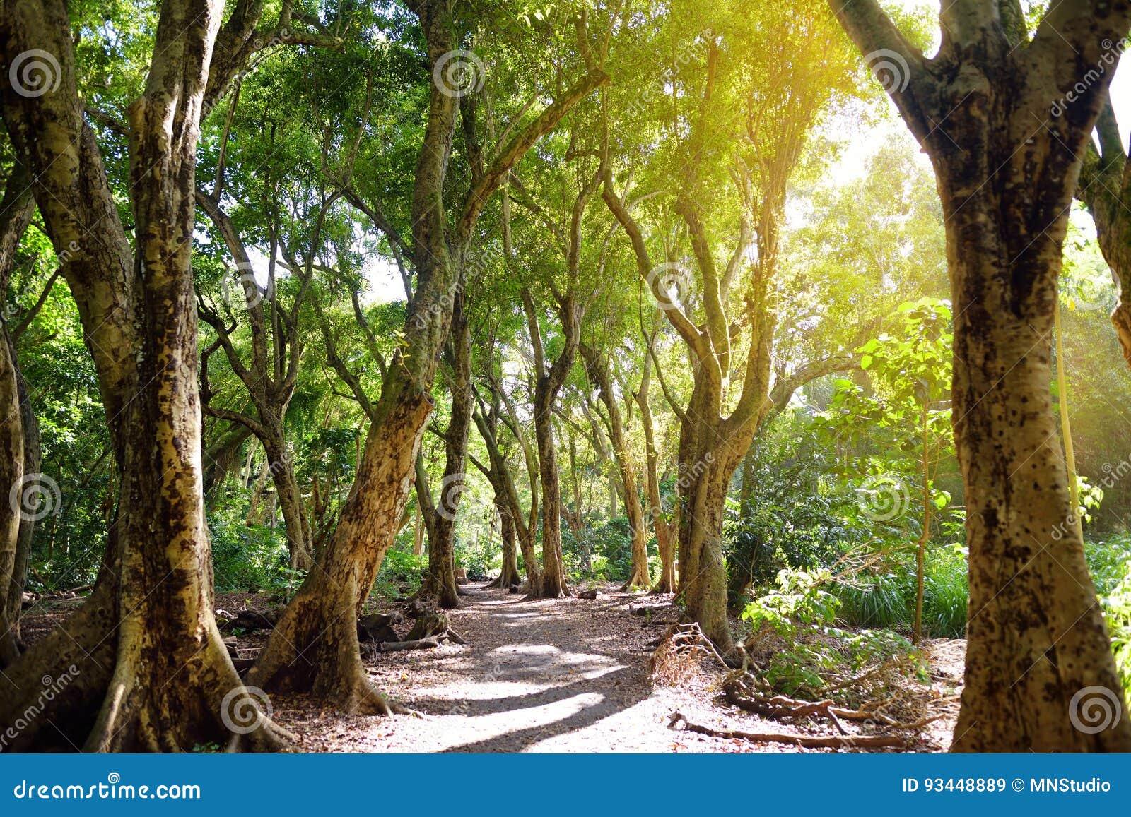 Красивый путь через тропический лес водя к пляжу залива Honolua, Мауи, Гаваи