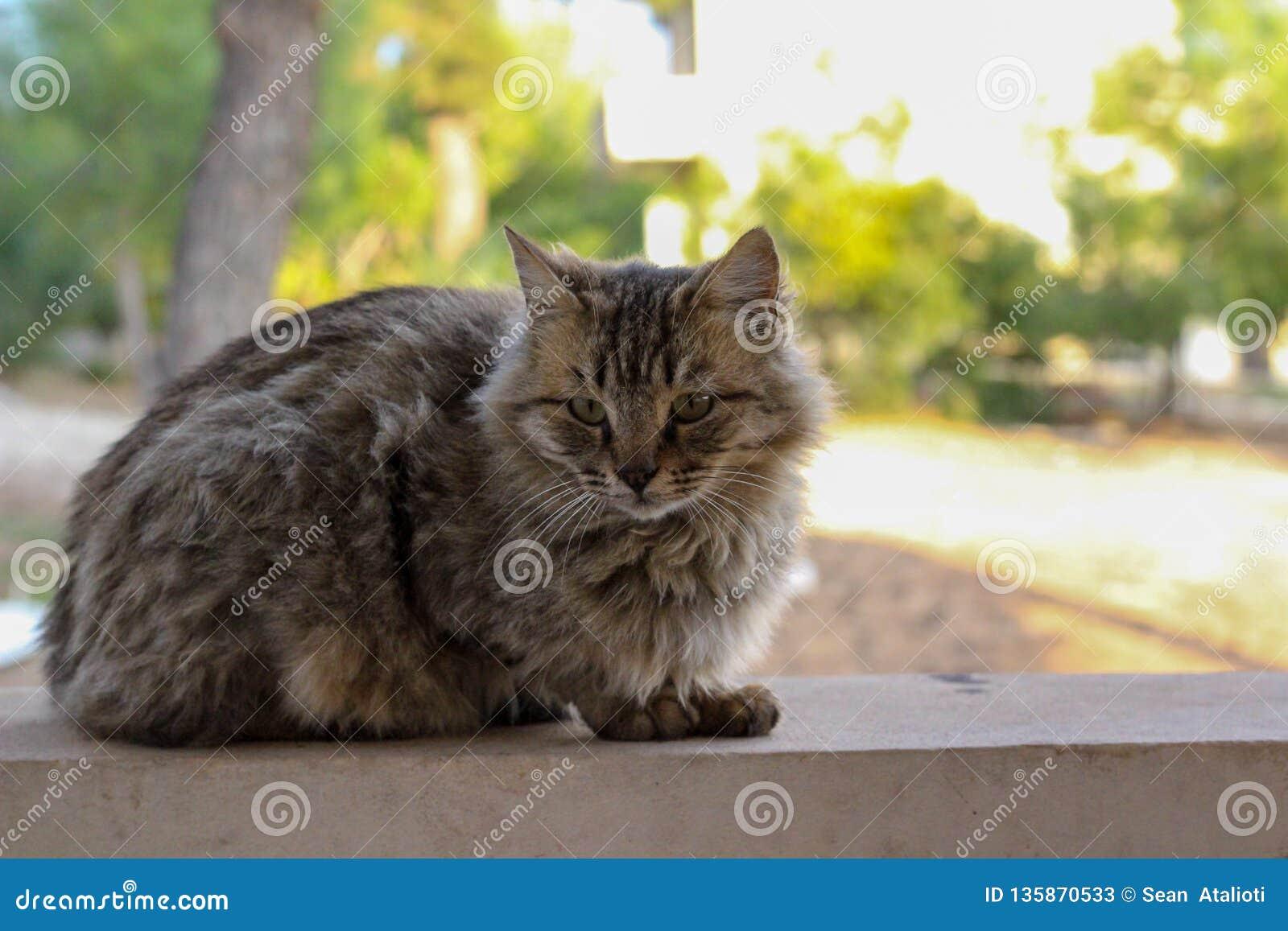 Красивый пушистый кот на стене, Лимасол, Кипр