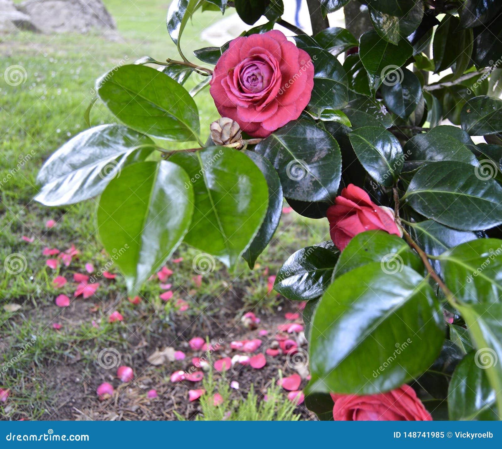 Красивый розовый естественный цветок с лепестками