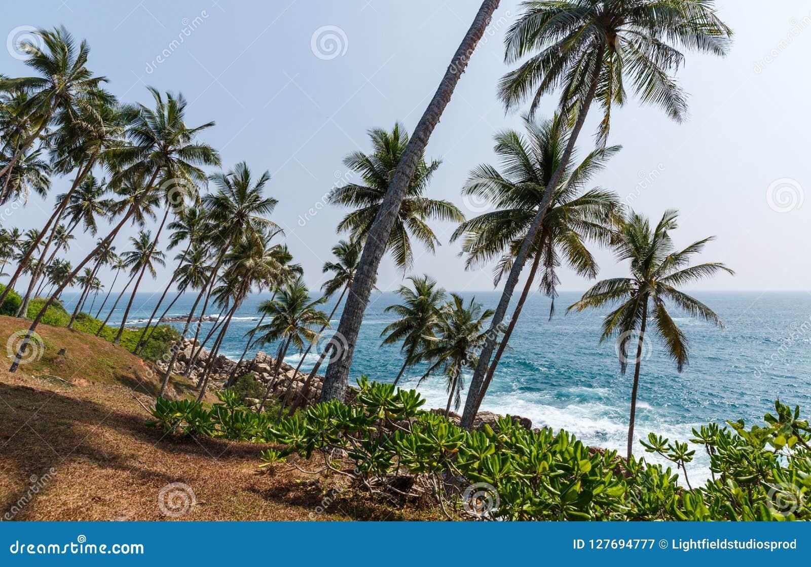 красивый сценарный взгляд береговой линии с пальмами, Шри-Ланка, mirissa