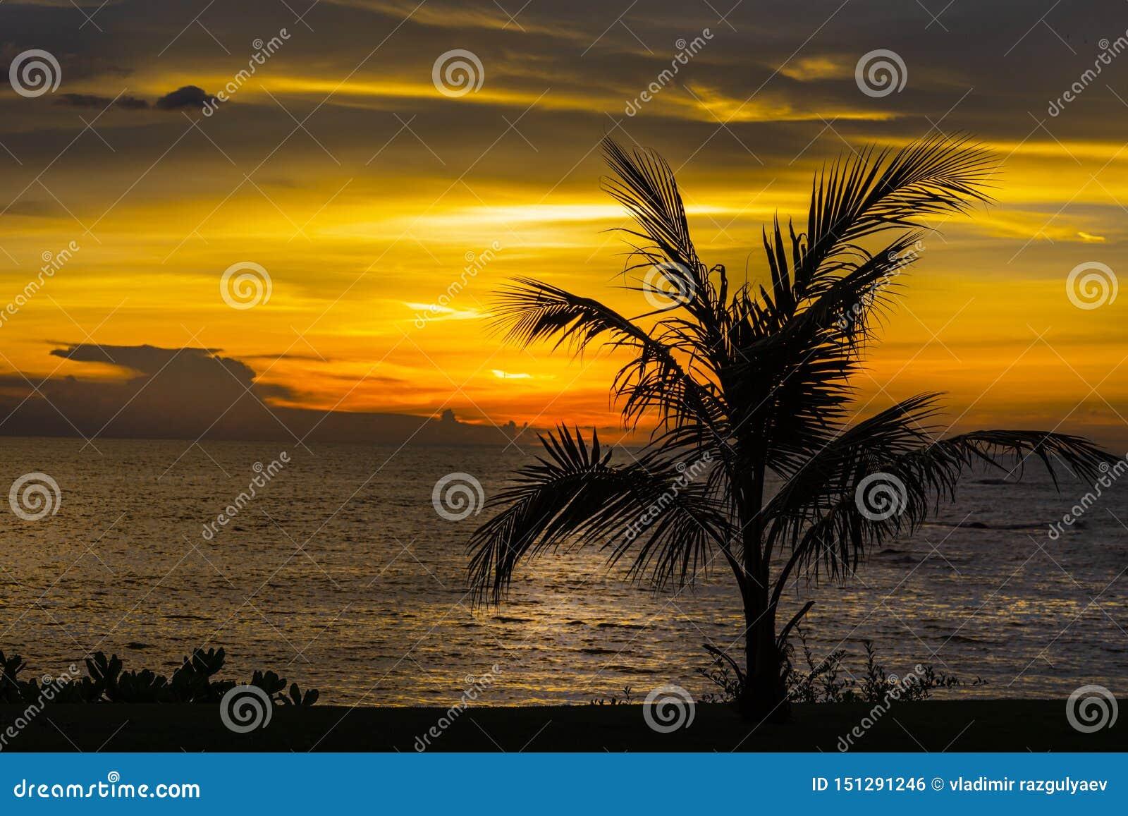 Красивый тропический ландшафт ночи с пальмами