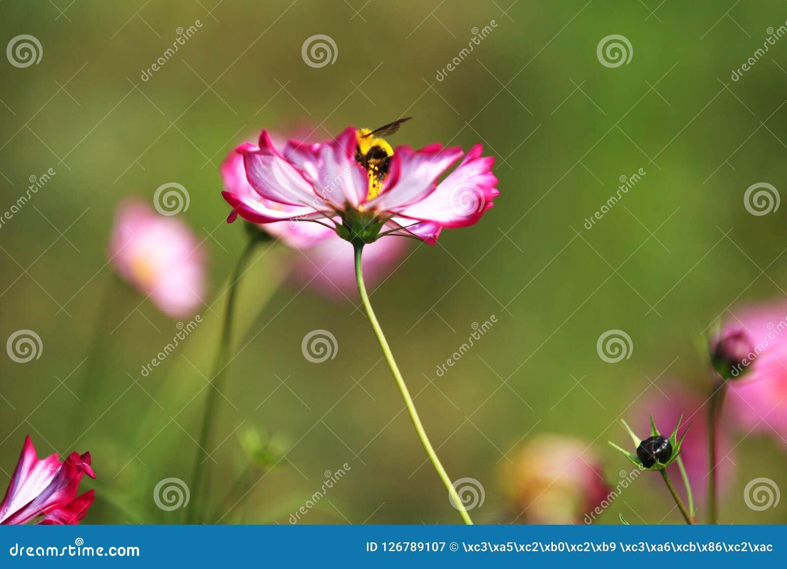 Красивый цветок в цветении