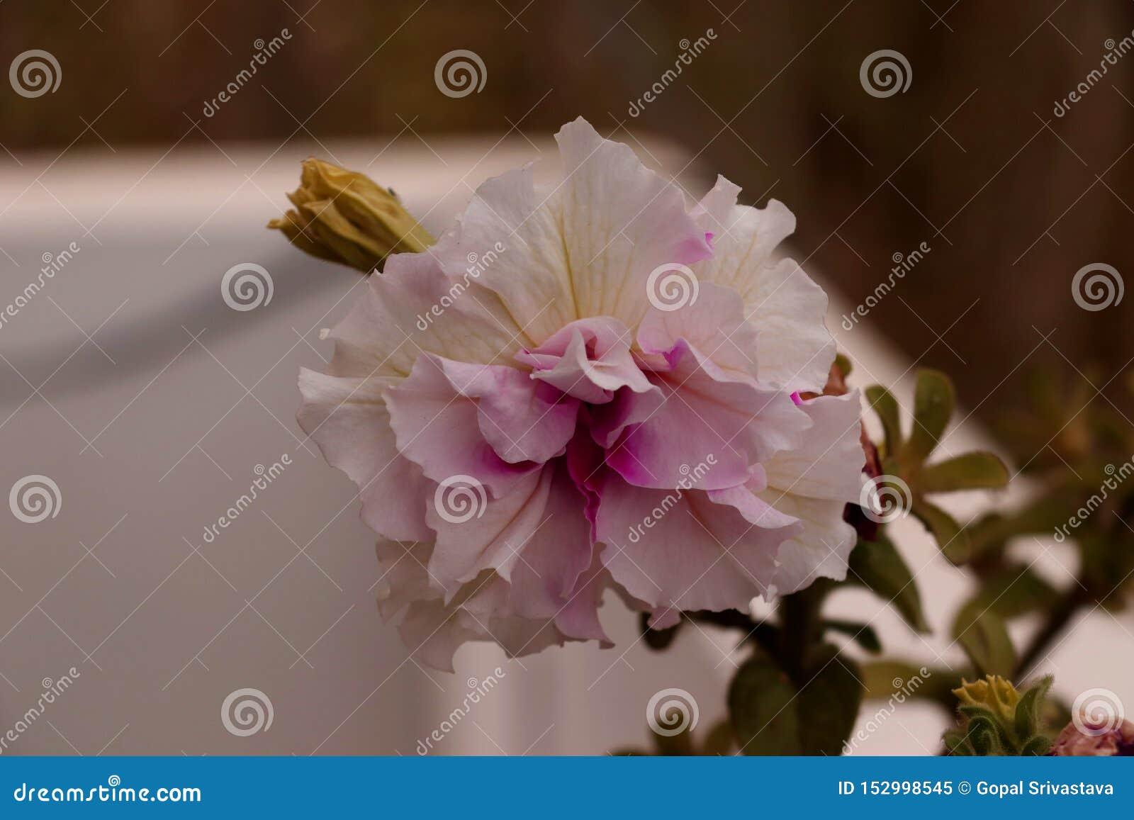 Красивый цветок с очень различной тенью