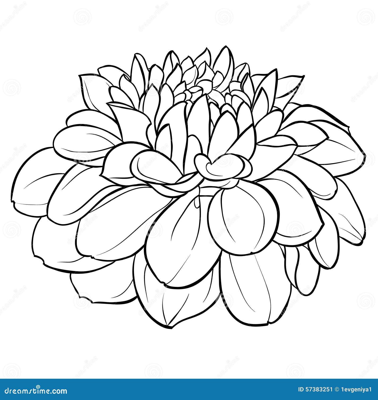 Черно-белые цветы нарисованные