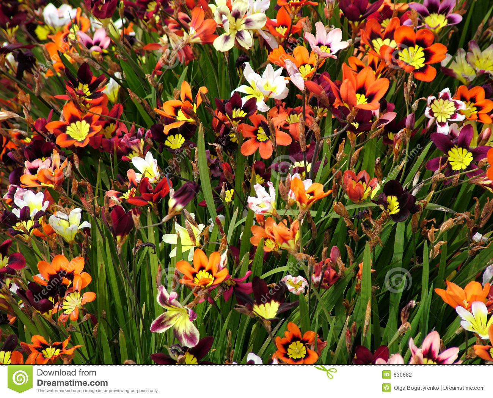 Download красит лужок стоковое фото. изображение насчитывающей молодость - 630682