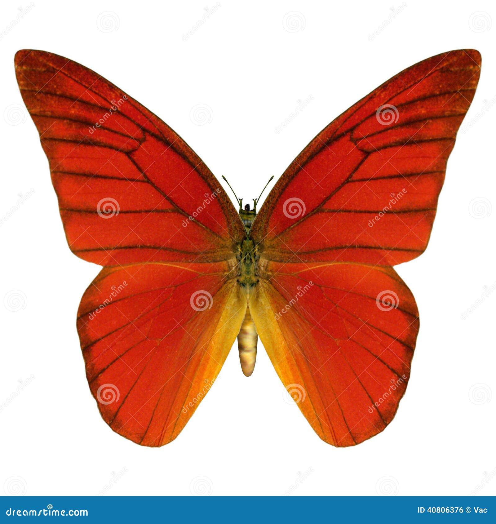 красная бабочка фото