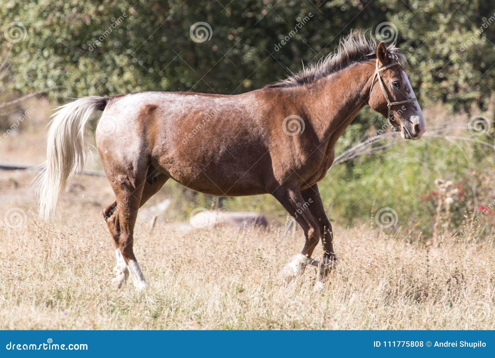 Красная лошадь на природе в осени