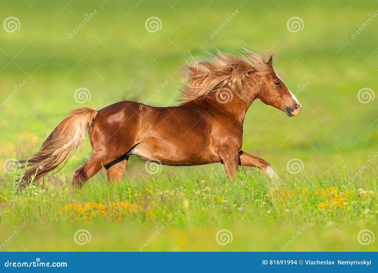 Красная лошадь, который побежали в цветках