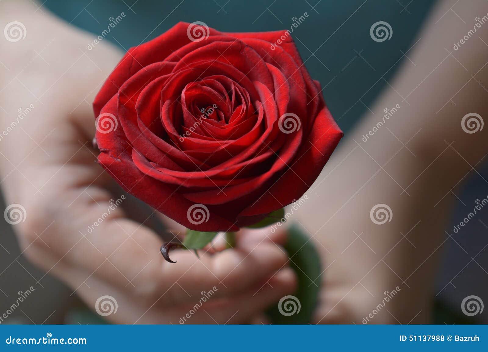 также станет редактор фото розы в руке подать заявку участие
