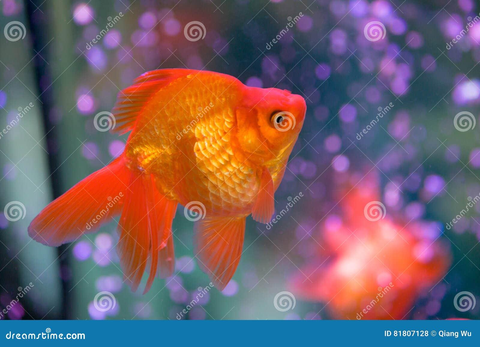 Красная рыбка