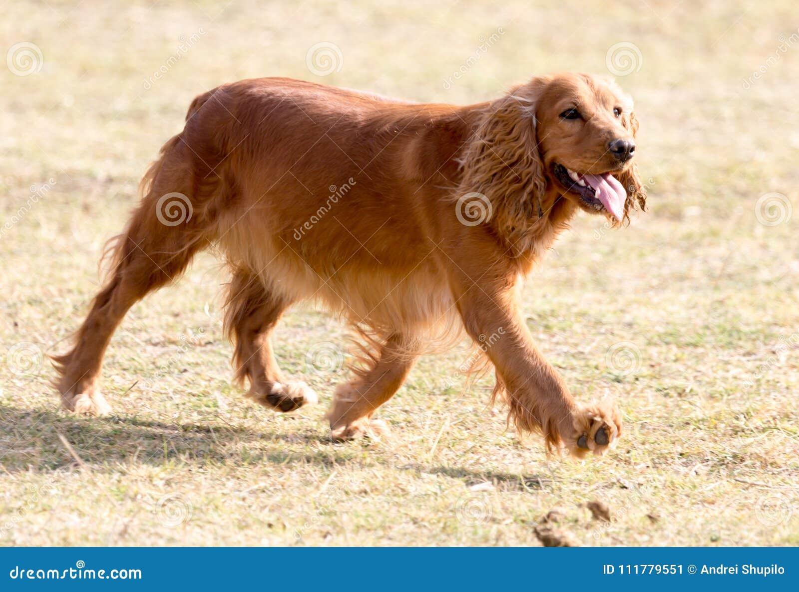 Красная собака на природе