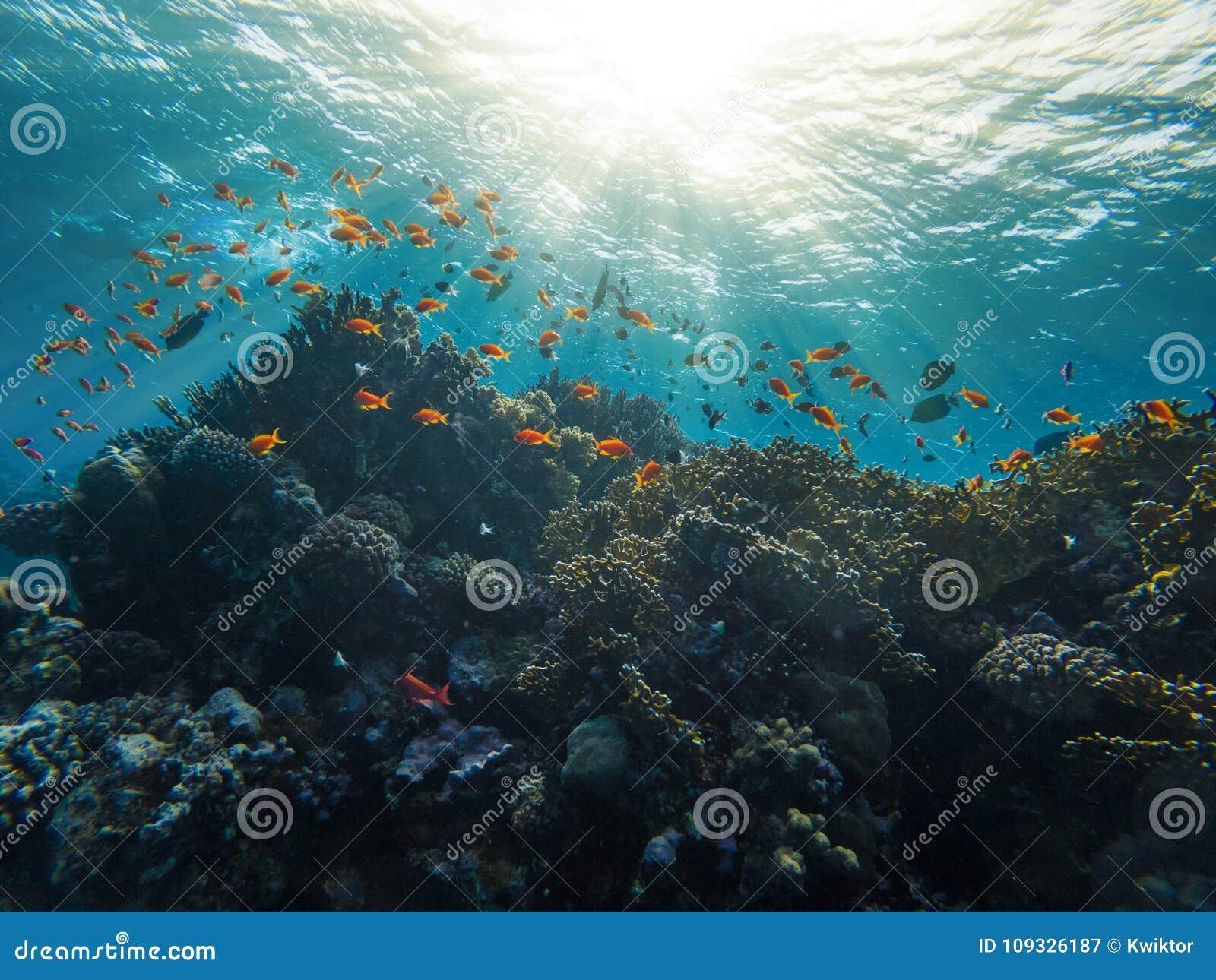 Красное Море Египет Marsa Alam кораллового рифа