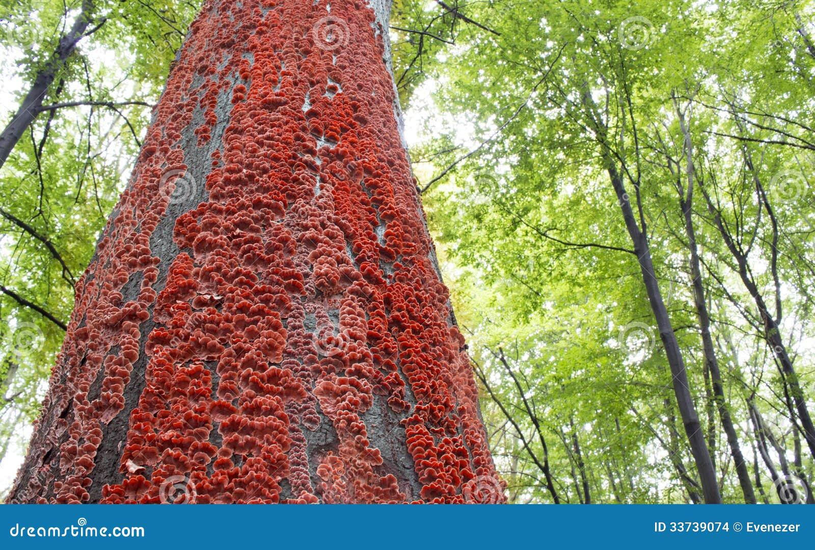 Красные грибы на расшиве дерева в лесе