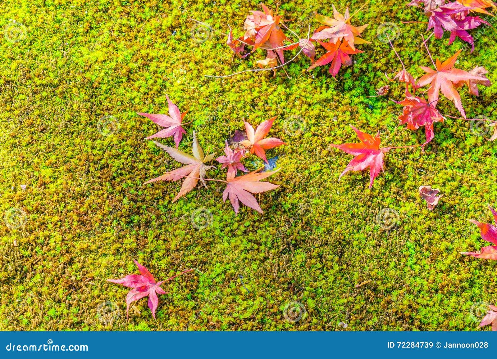 Download Красные желтые кленовые листы осени на траве свежей весны зеленой Стоковое Изображение - изображение насчитывающей день, angiosperms: 72284739