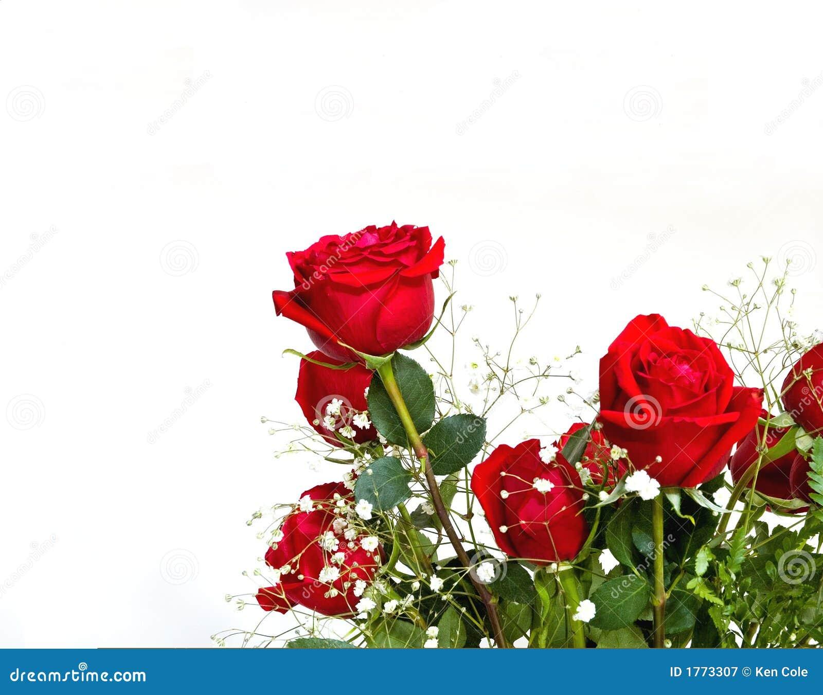 красные розы размечают текст