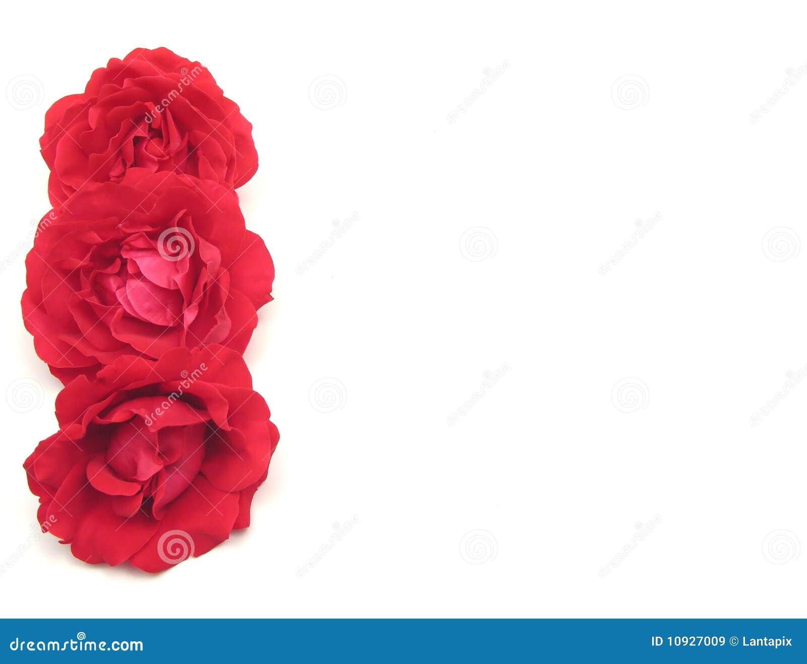 красные розы 3