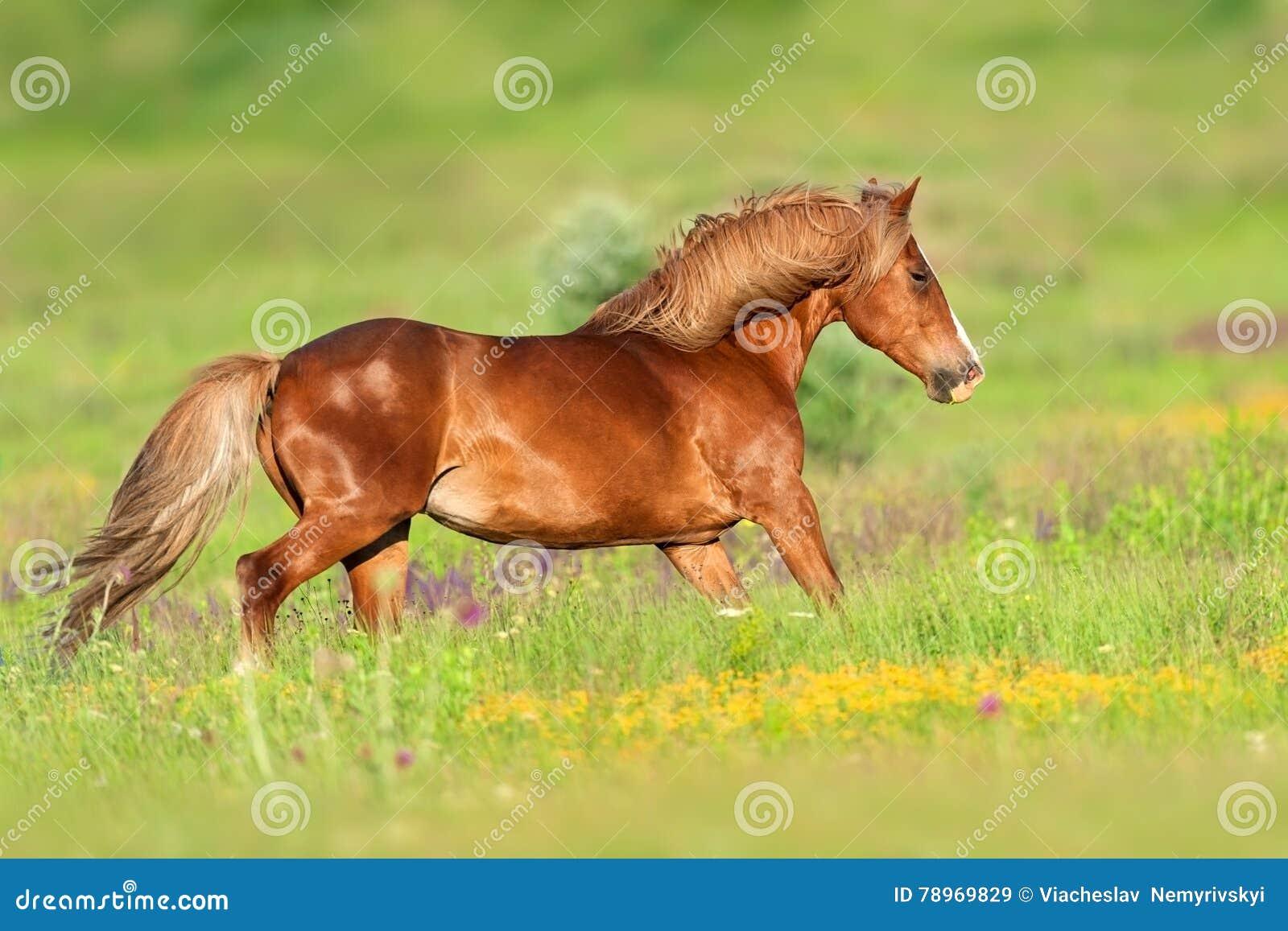 Красный бег лошади