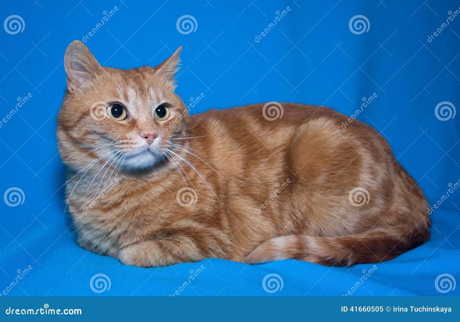 Красный лежать кота