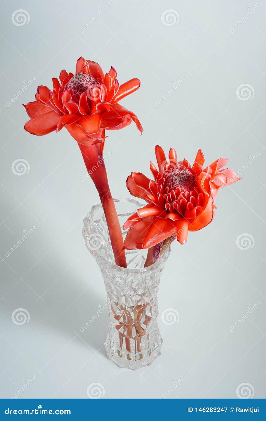 Красный имбирь факела в стеклянном опарнике