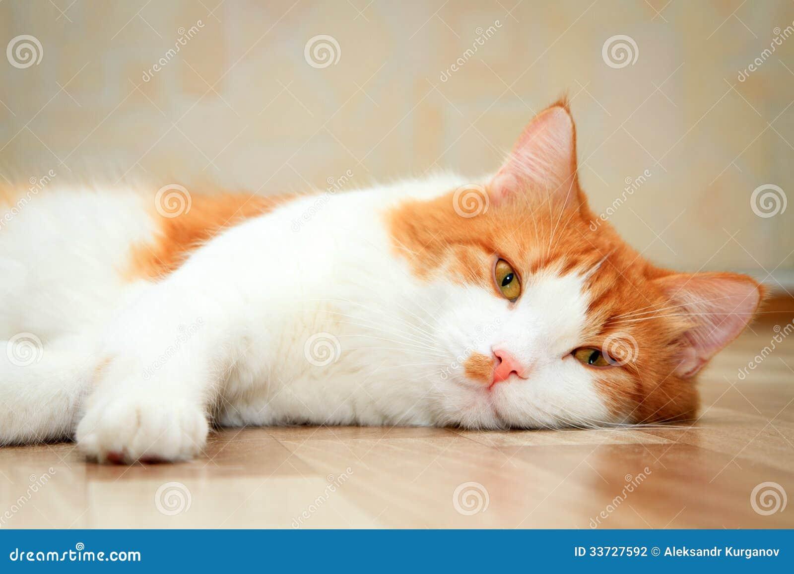 Красный и белый кот лежа на поле