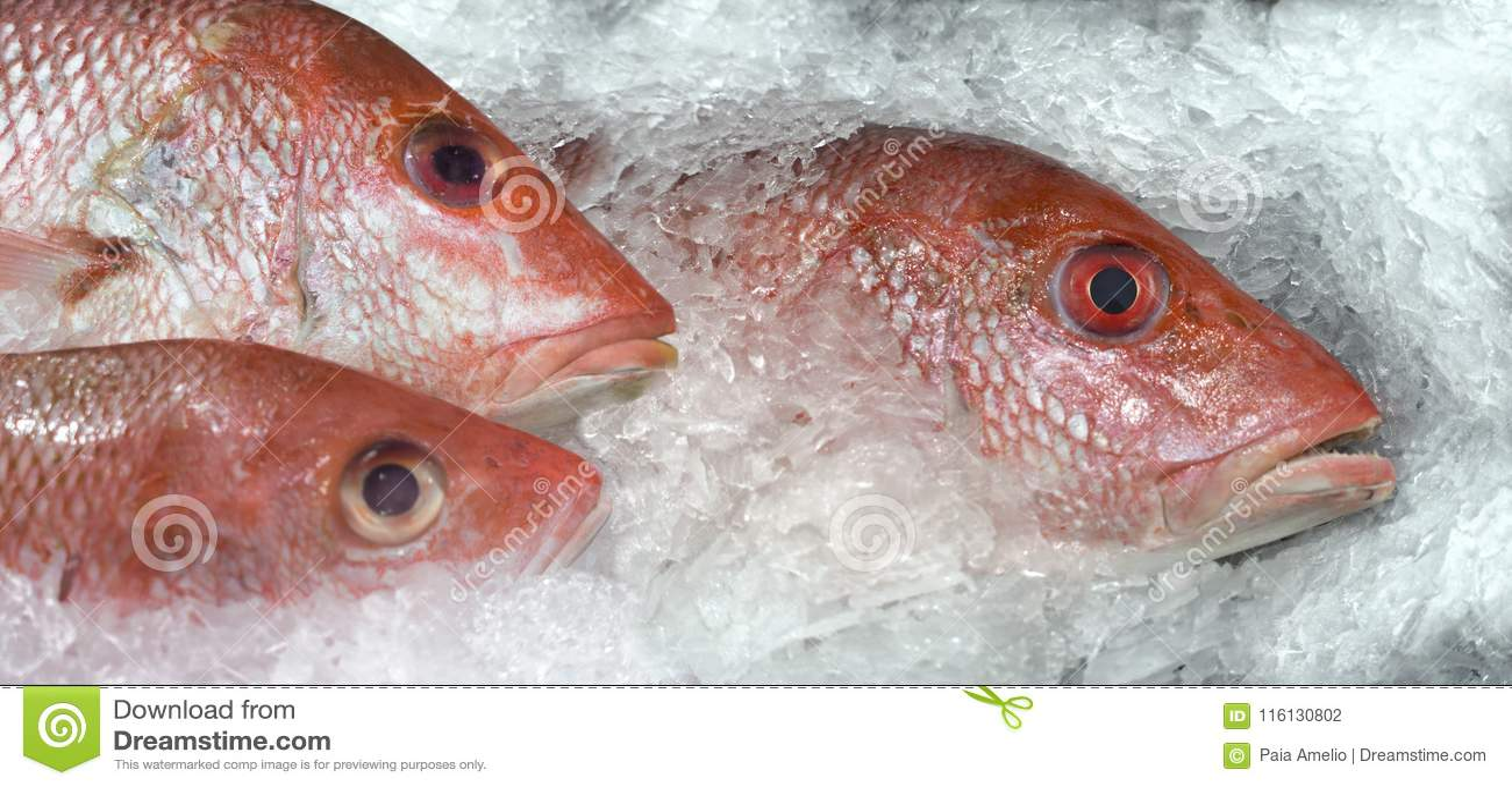 Красный люциан рыбного базара на льде