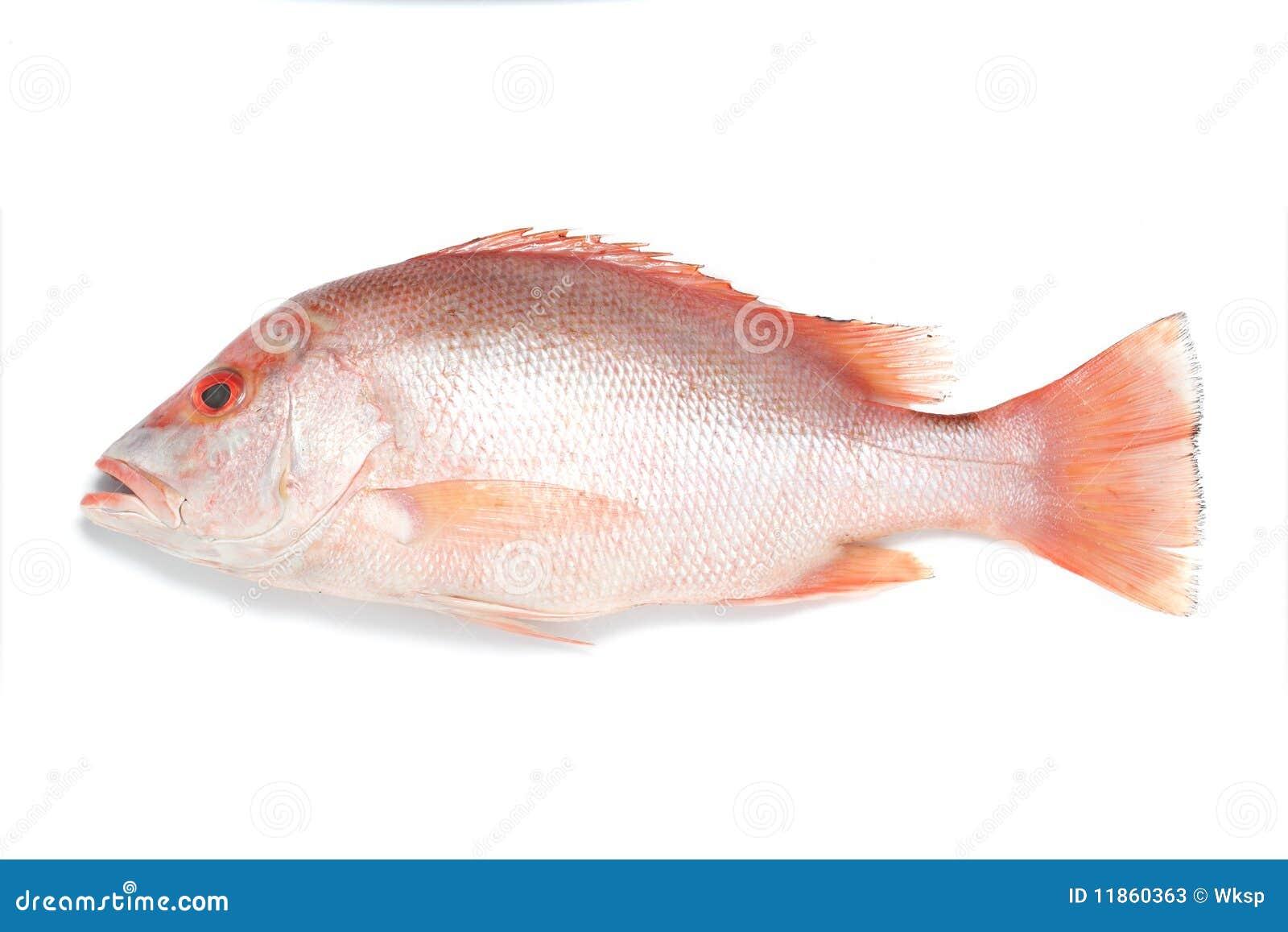 красный люциан рыб
