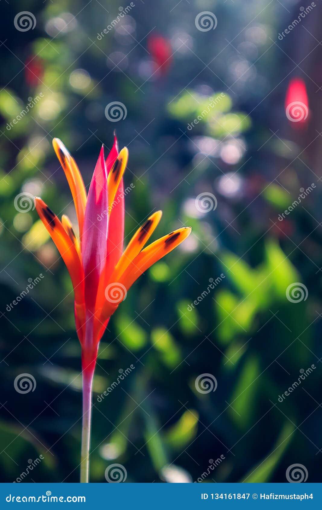 Красный оранжевый цветок с предпосылкой Bokeh