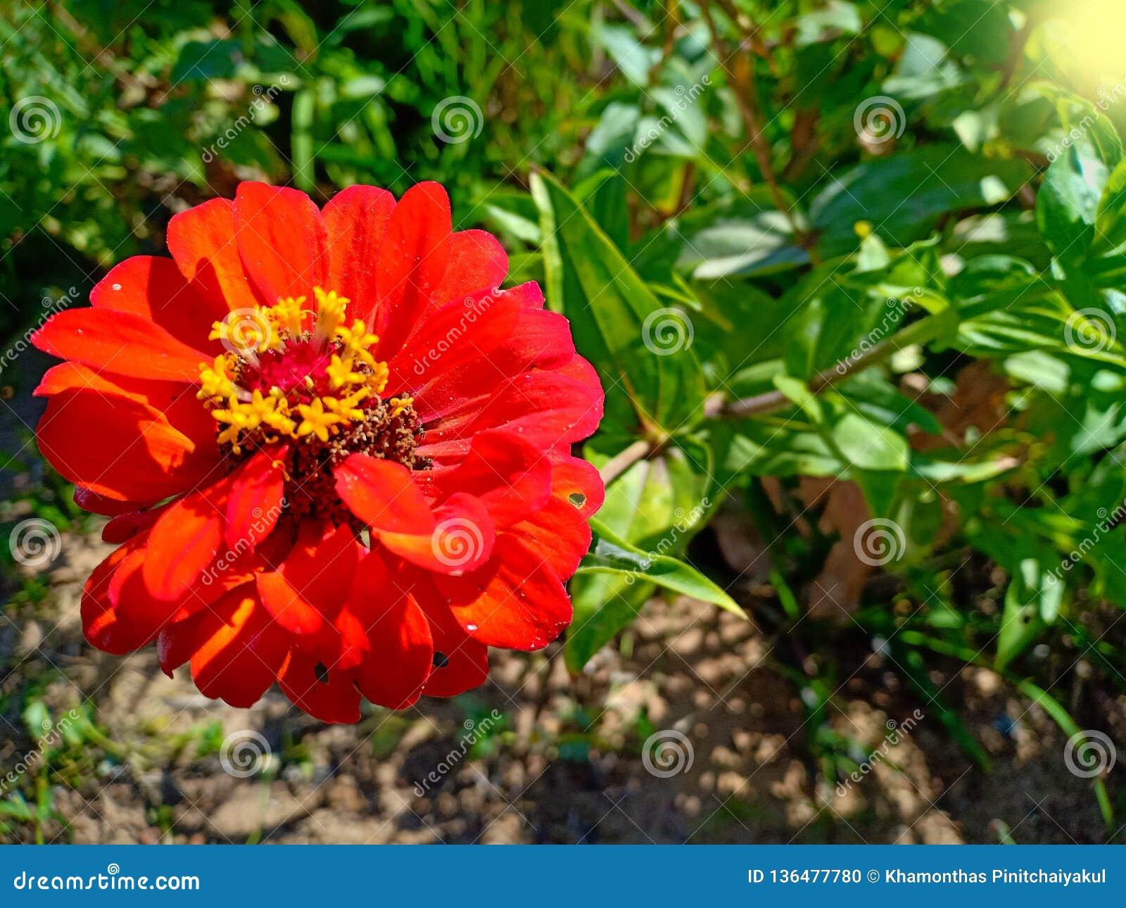 Красный цветок в заводе