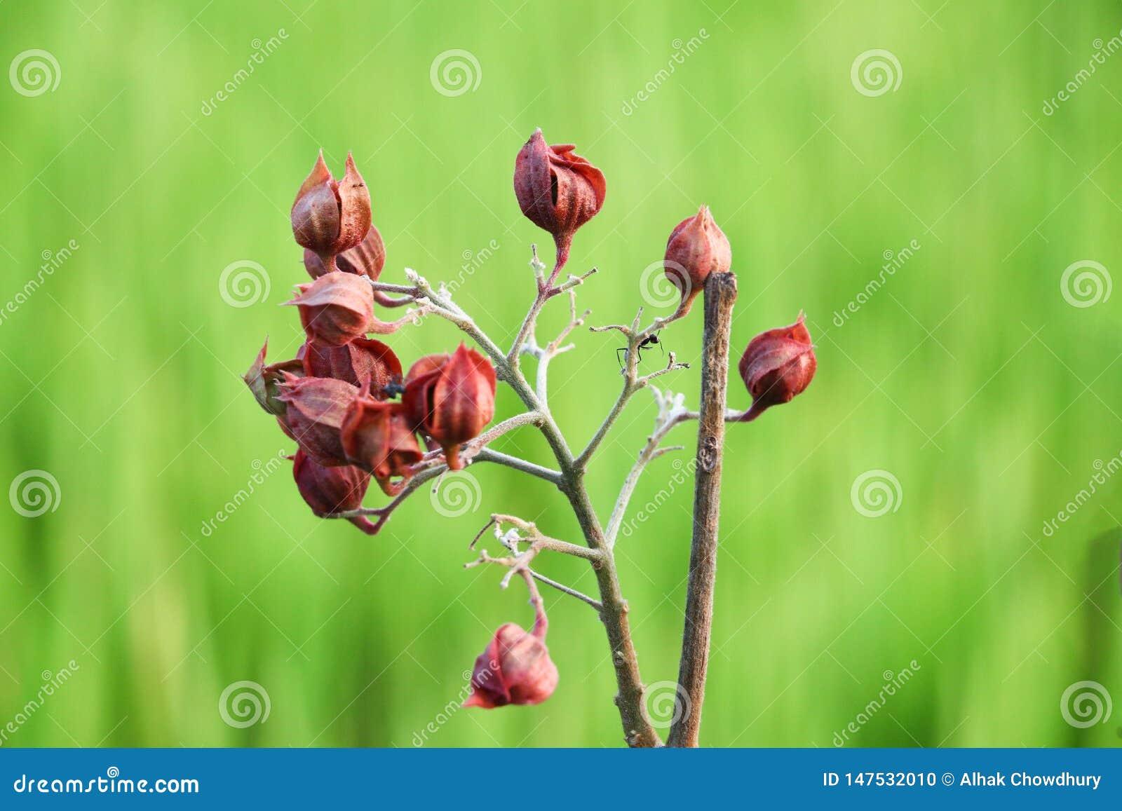 Красный цветок на зеленой предпосылке