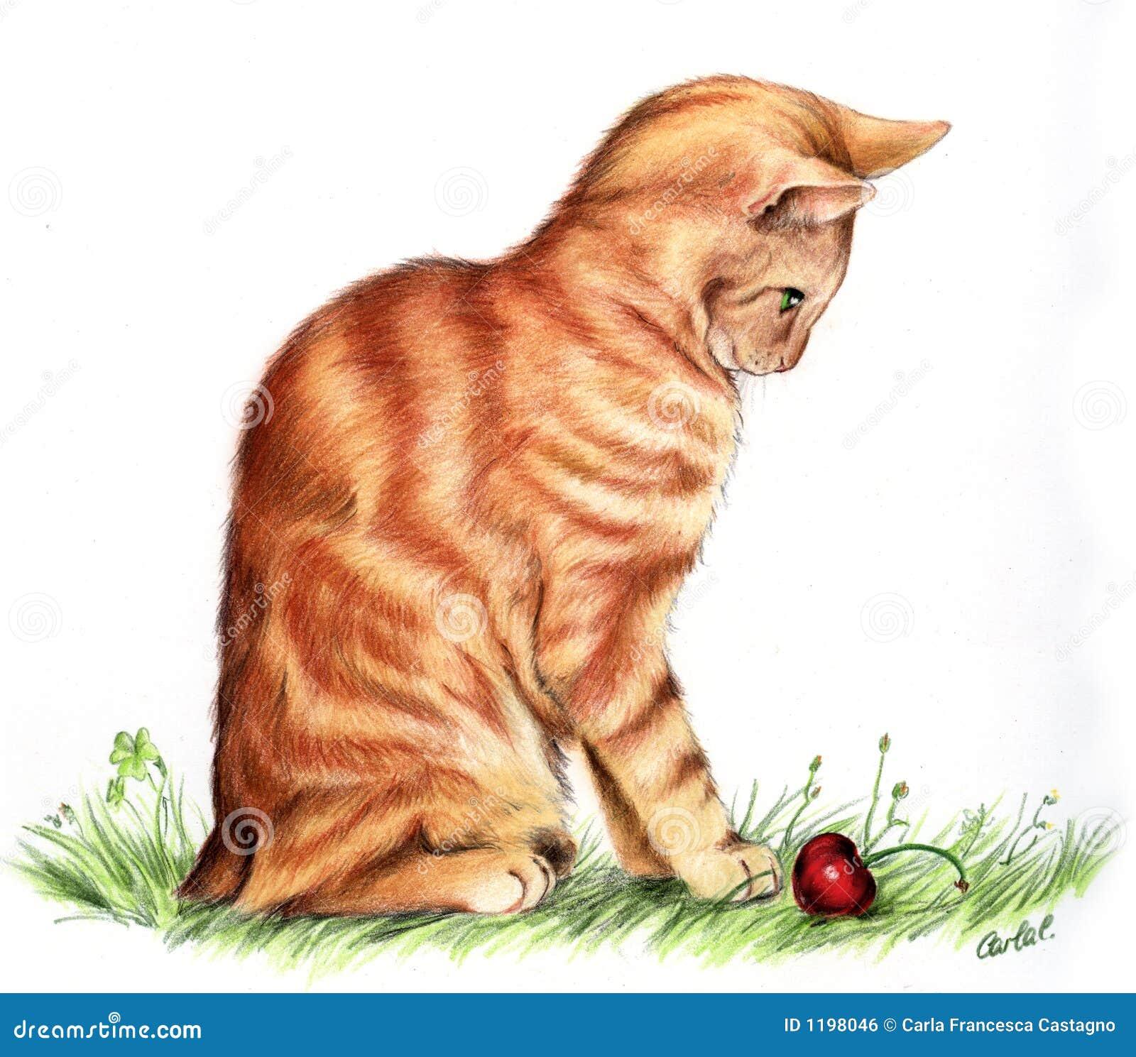 красный цвет кота