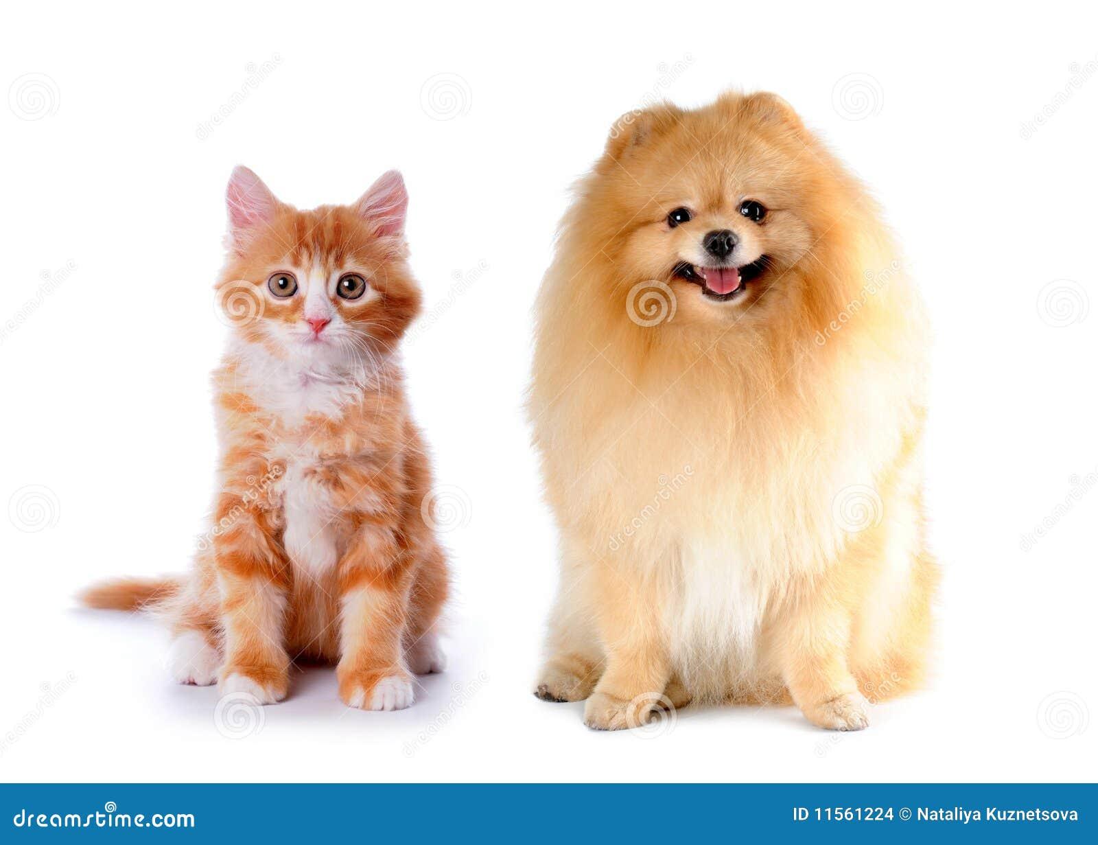 красный цвет собаки цвета кота