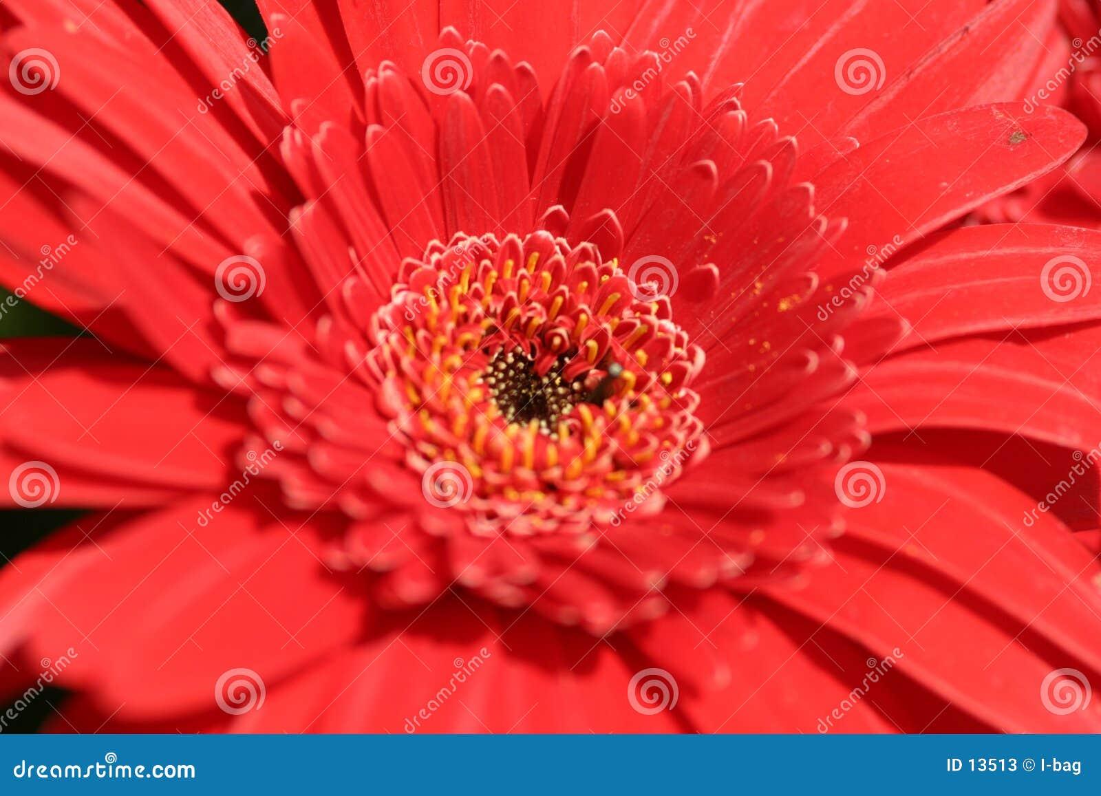 красный цвет страсти