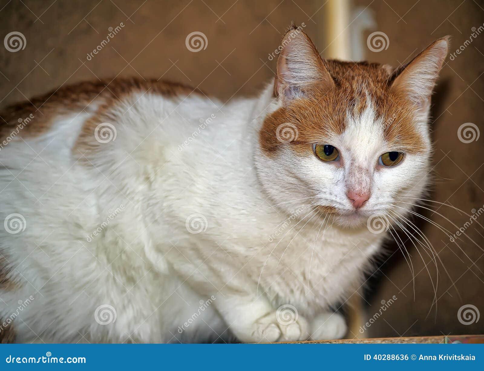 Красный цвет с белым котом