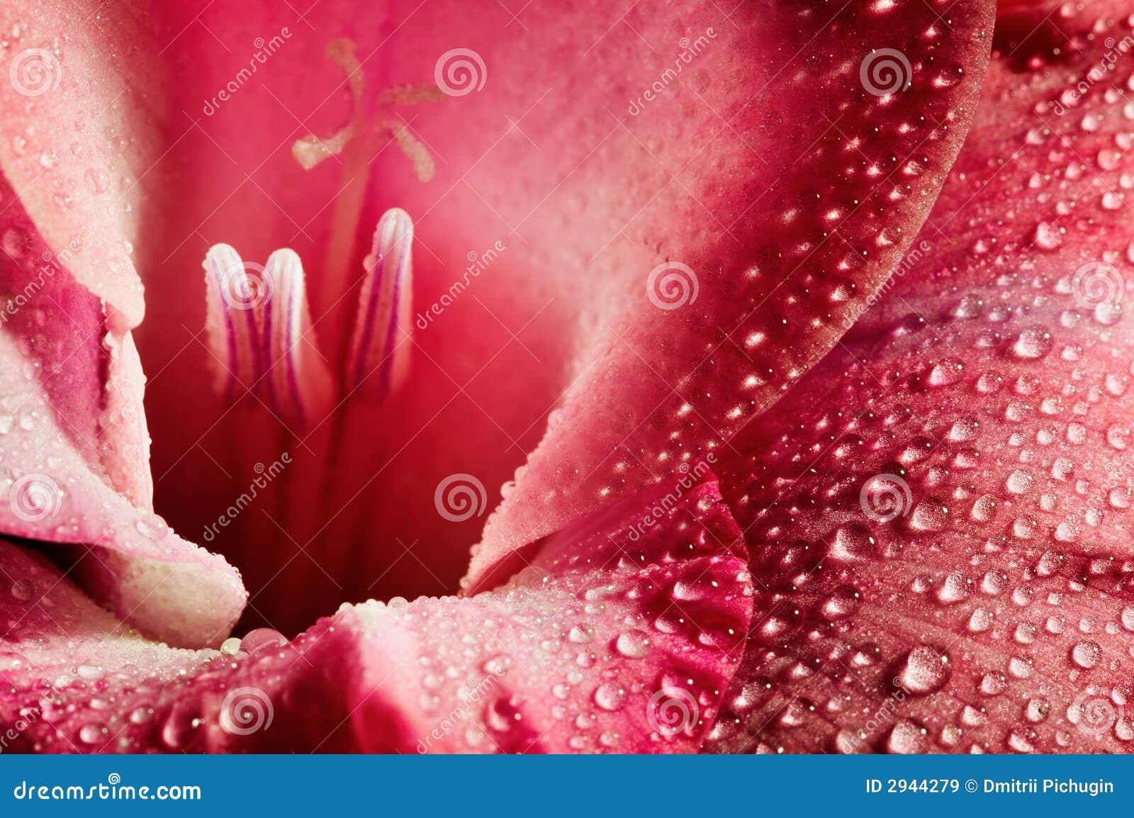 красный цвет цветка крупного плана