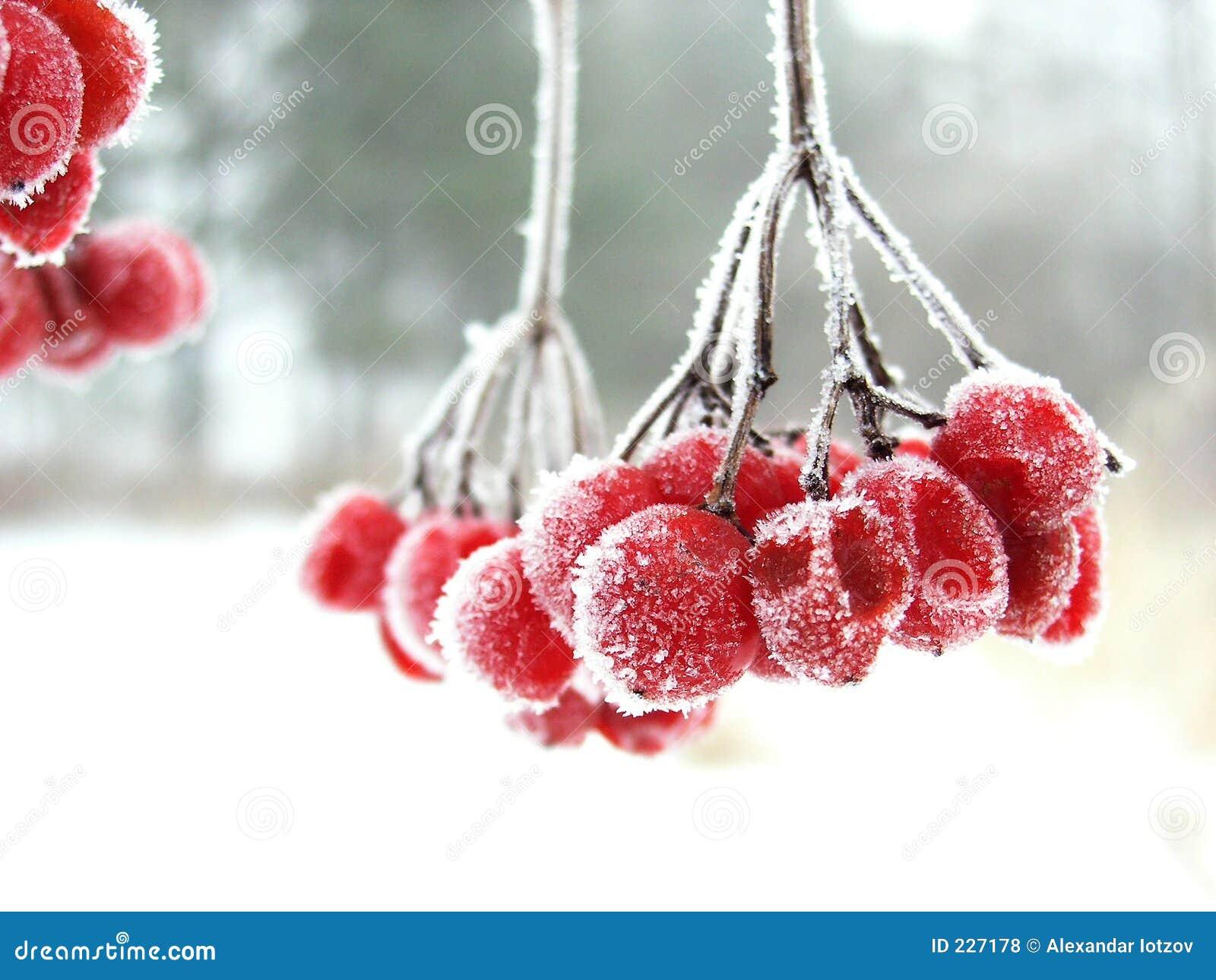 красный цвет ягоды зарифмовал