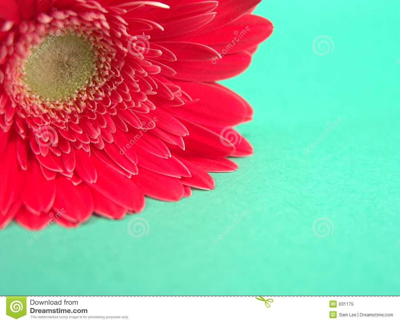 Download красный цвет Gerbera предпосылки Стоковое Изображение - изображение насчитывающей влюбленность, цветок: 631175